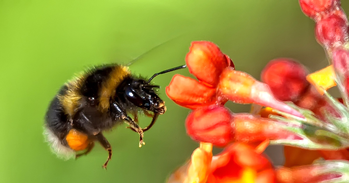 Trump Admin Reverses Ban on 'Bee-Killing' Pesticides in National Wildlife Refuges
