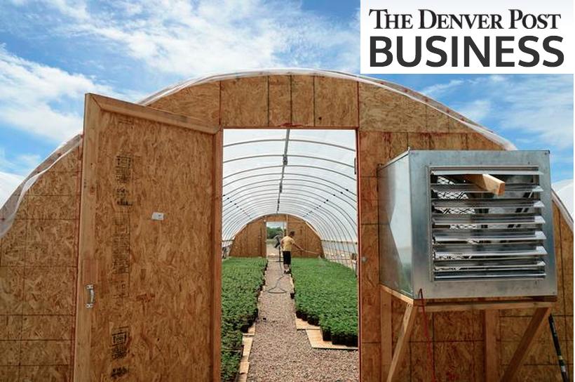hemp greenhouse with sky