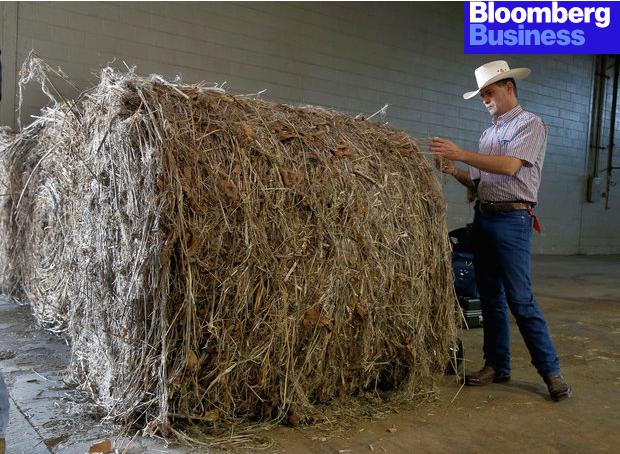 Farmer with Large Bale of Hemp