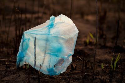 Plastic bag in a mangrove