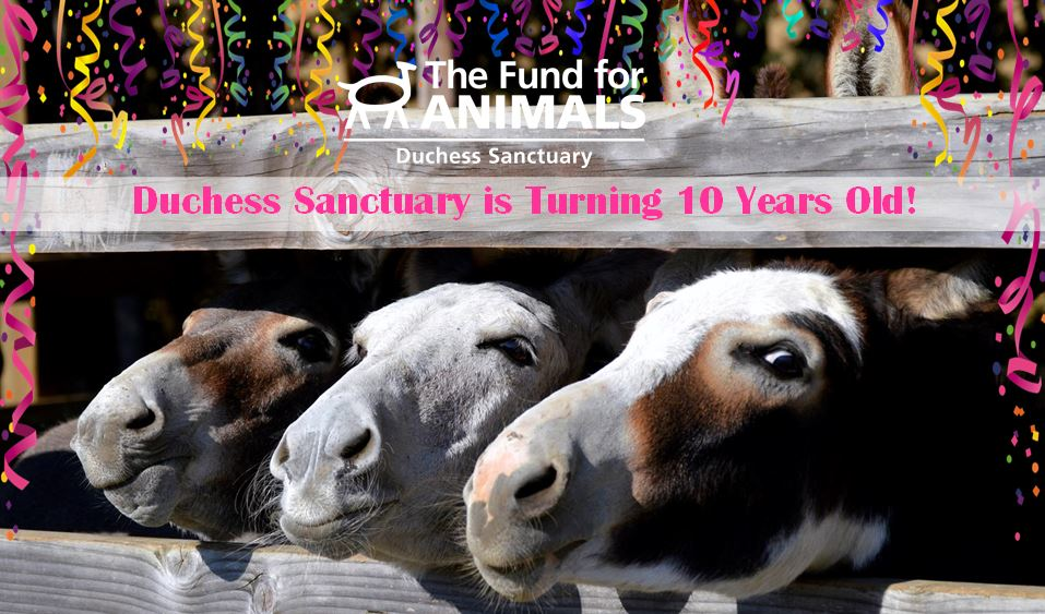 10 years and the best donkeys ever