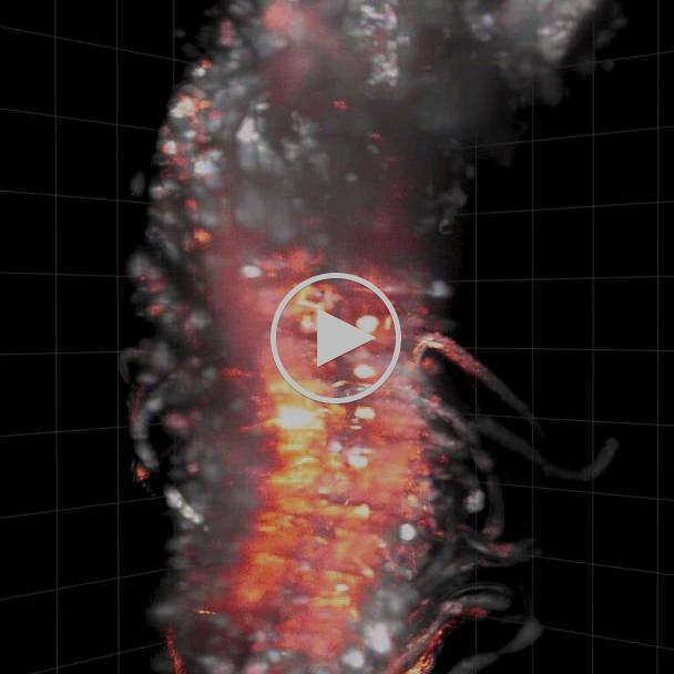 Nature Communications - Video 1 - Keller et al.