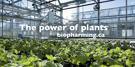 Biopharming - the power of plants (image)