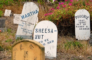 Grave markers in the Pet Cemetery