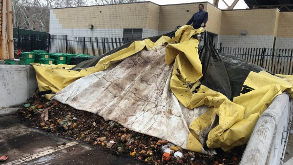 Man removes cover from compost windrow