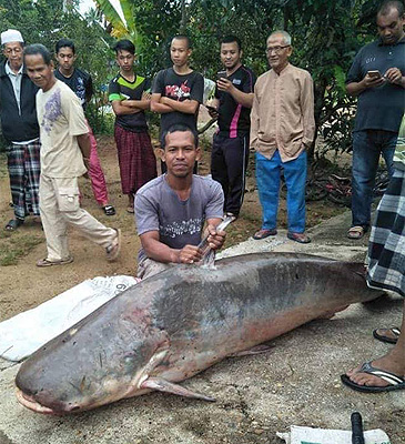 150 kg Pangasius from Malaysia