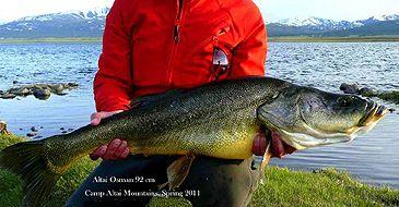 Altai Osman rod & reel record