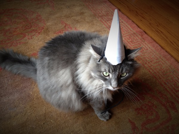 King David Maincoon Cat in a dunce cap