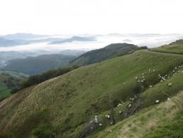 El Camino Pamplona