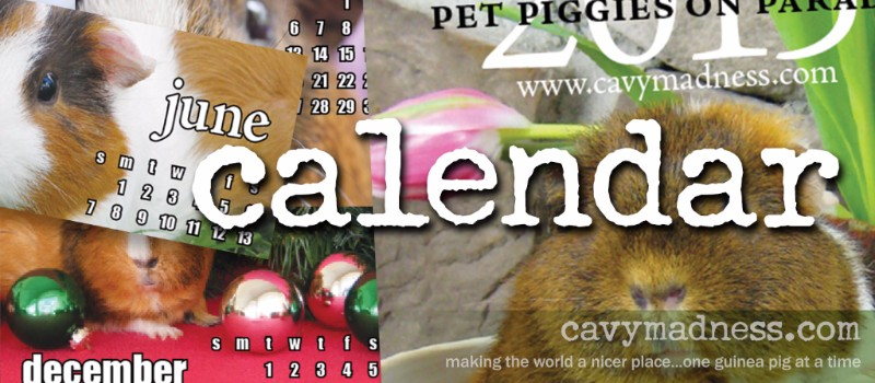 2017 Pet Piggies on Parade - CavyMadness.com