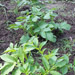Need a garden plot?