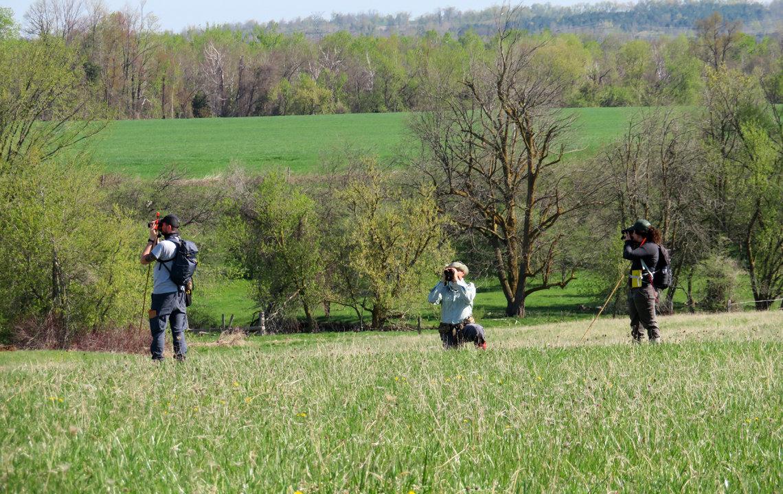 Surveying for Bobolink