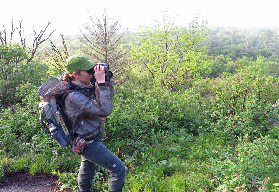 Surveying for Prairie Warblers_2