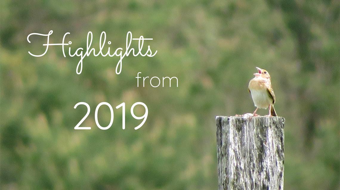 Highlights from 2019_Grasshopper sparrow singing