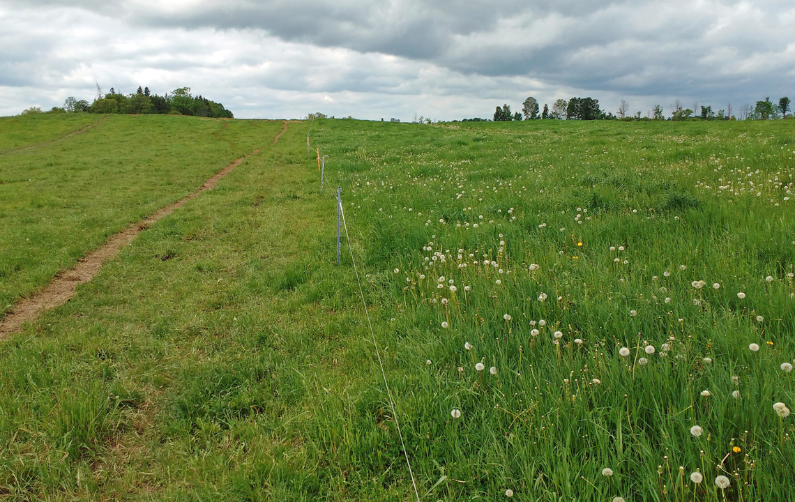 Grazed pasture and bobolink refuge