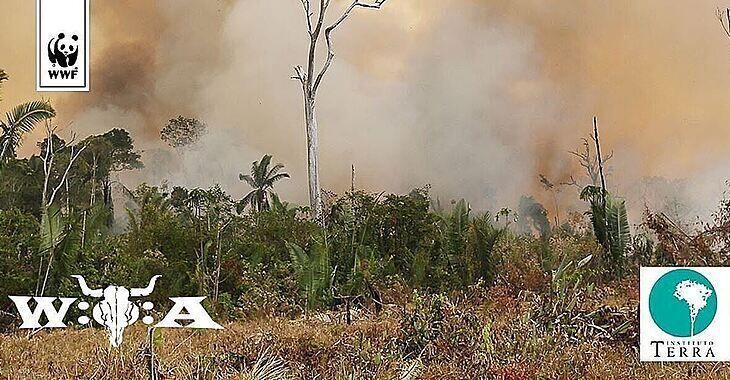 Das W:O:A (Wacken Open Air Festival) pflanzt mindestens 5.000 Bäume in Brasilien