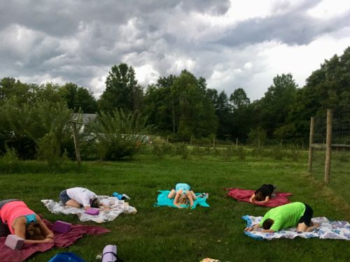 Yogis finding child's pose at Greenfield Berry Farm   Aug 20, 2019