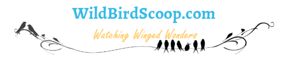 wild bird scoop