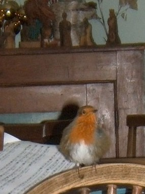 Robin sitting on a wooden chair