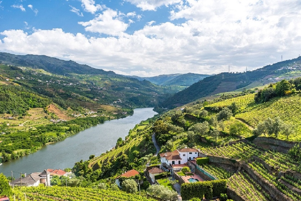Vineyards in Douro