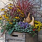 Centro Garden - Apple Crate Planter Workshop