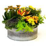 Centro Garden - Thanksgiving Centrepiece Workshop