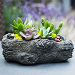 Centro Garden - Mini Succulent Log Workshop
