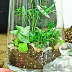 Centro Garden - Terrarium Workshop