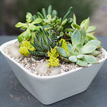 Centro Garden - Succulent Bowl Workshop