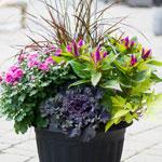Centro Garden - Fall Planter Workshop