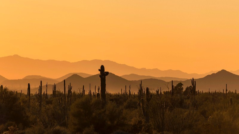 Find sunshine in the sonoran desert on a mountain biking trip with AOA