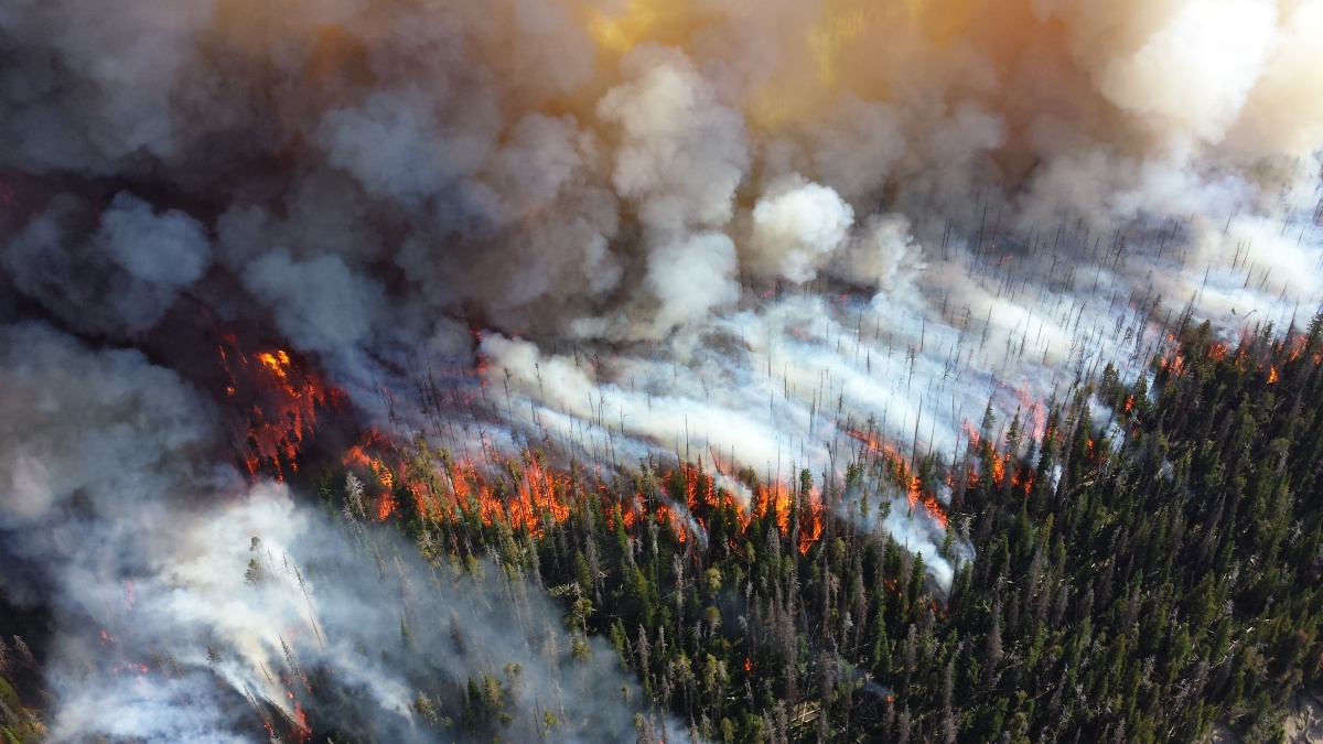 fire and smoke during Yellowstone fire
