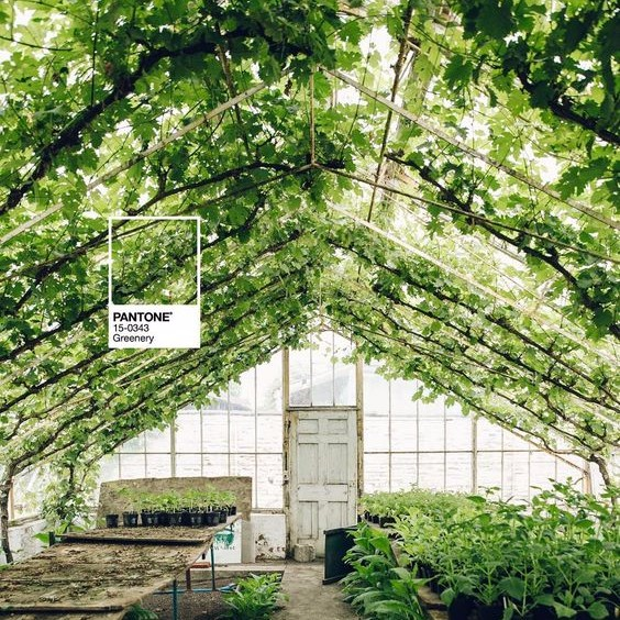 PANTONE'S COLOUR OF THE YEAR 2017: IDEAS FOR USING GREENERY AT EVENTS
