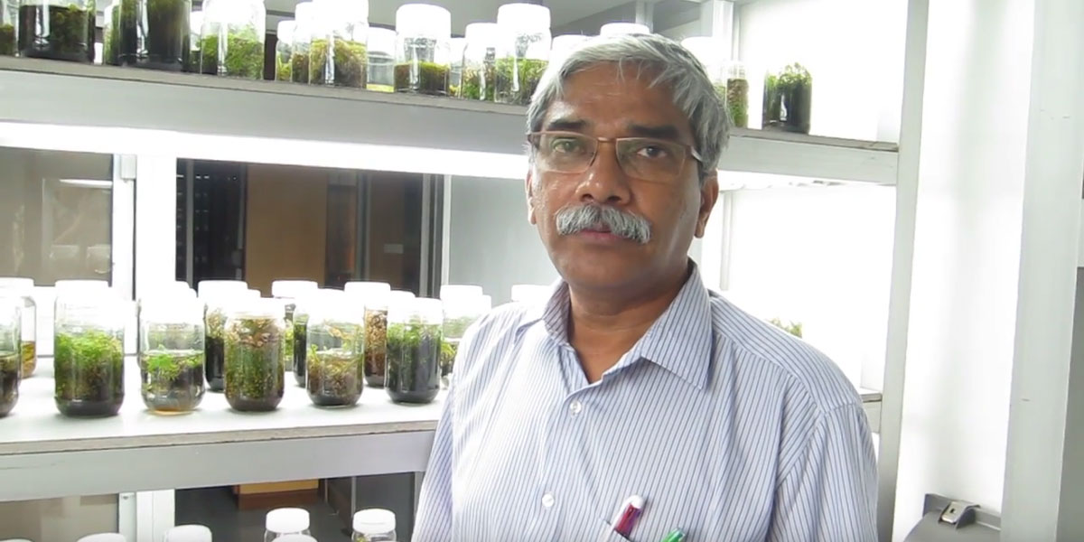 Prof Saradhi says that GM mustard should not be released