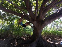 Rachel in a tree