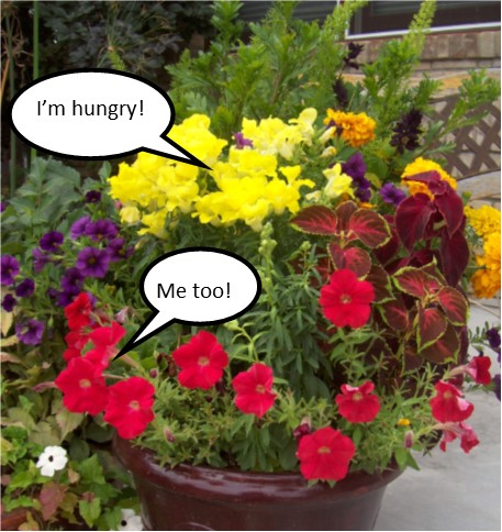Hungry Flowers