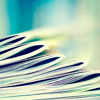 A stack of journals.