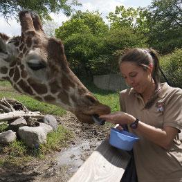 Zookeeper with giraffe