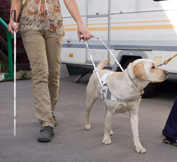 Guide dog with owner