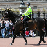Police officer mounted on horse