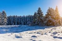 Dürfen Sie Ihren Weihnachtsbaum selber schlagen?