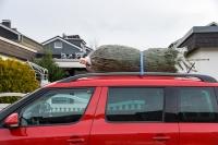 So transportieren Sie den Weihnachtsbaum richtig!