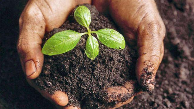 Dotnuva Seeds