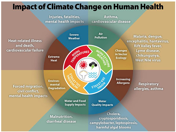CDC: In the U.S., public health can be affected by disruptions of physical, biological, and ecological systems, including disturbances originating here and elsewhere. The health effects of these disruptions include increased respiratory and cardiovascular disease, injuries and premature deaths related to extreme weather events, changes in the prevalence and geographical distribution of food- and water-borne illnesses and other infectious diseases, and threats to mental health.