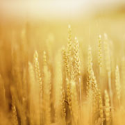 Calidad Agroindustrial