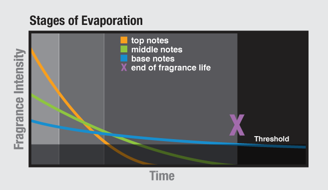 Stages of Fragrance Evaporation