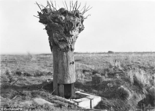 Camouflage tree used during World War I