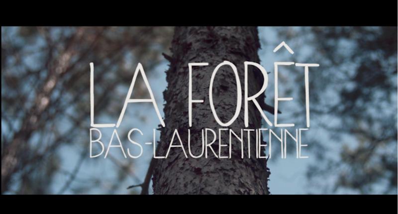 Vidéo «La forêt bas-laurentienne»