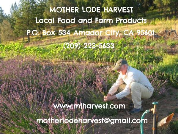 Abbondanza Lavender Harvest