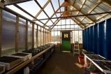 Abbondanza's Greenhouse